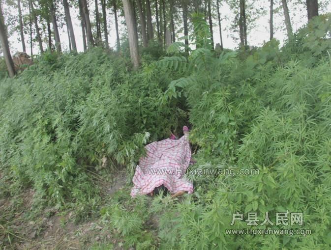 户县5月25日十岁女孩惨死坟地【案发现场】